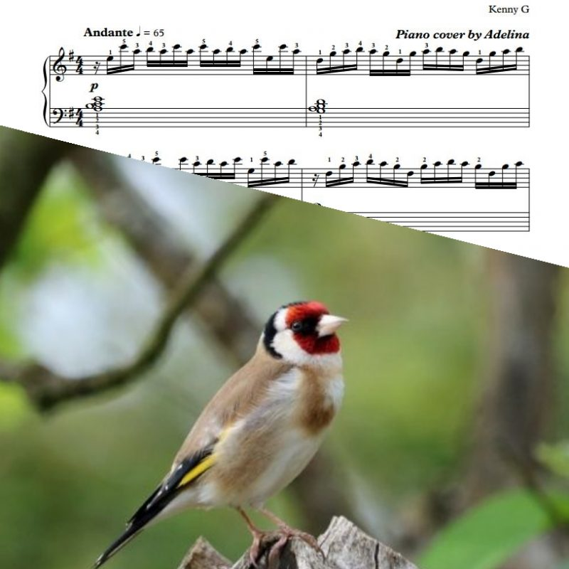 """Songbird"" – Kenny G – Piano Sheet Music"